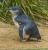 KoalaPk-2968-984-1024
